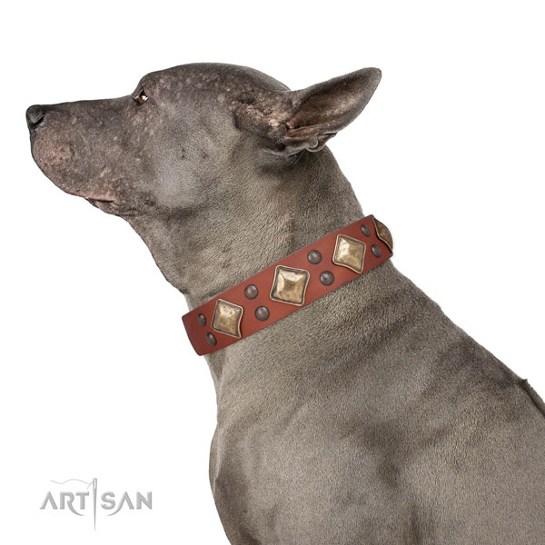 Walking decorated dog collar made of best quality natural leather