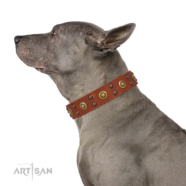 Everyday use dog collar with inimitable decorations