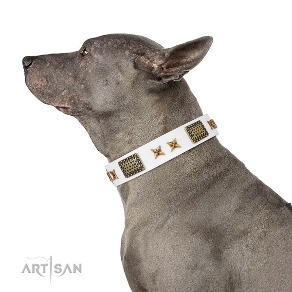 Impressive embellishments on comfy wearing full grain genuine leather dog collar