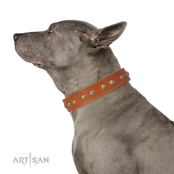 Significant decorations on everyday walking full grain genuine leather dog collar