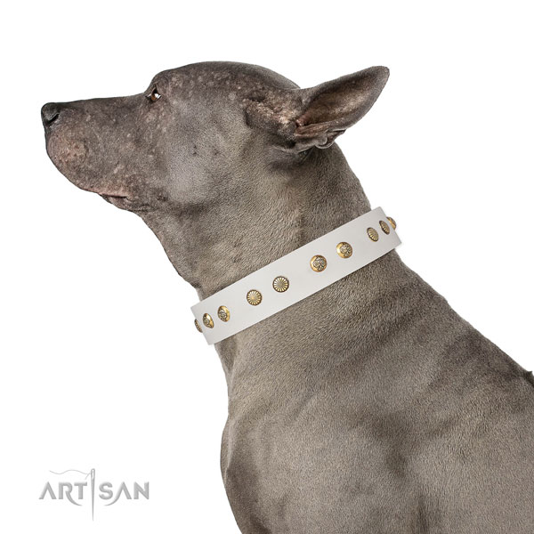 Unique adornments on basic training genuine leather dog collar