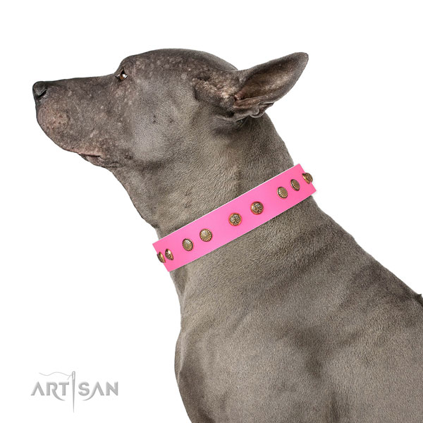 Exquisite decorations on stylish walking full grain leather dog collar