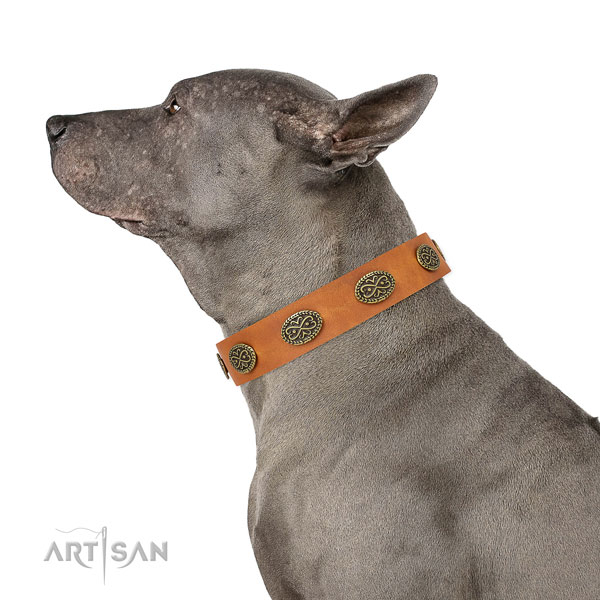 Fashionable studs on daily walking leather dog collar