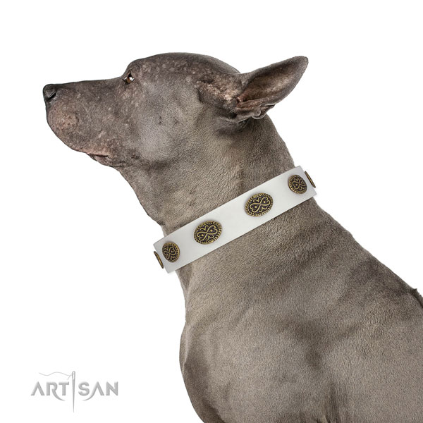 Fashionable decorations on everyday use genuine leather dog collar