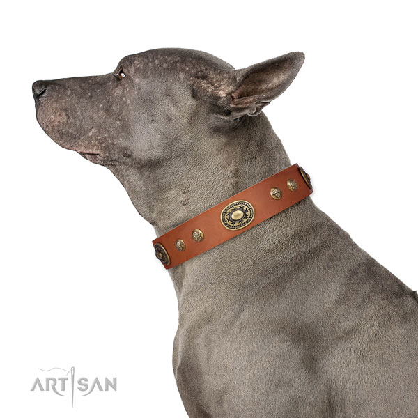 Exceptional studs on walking dog collar