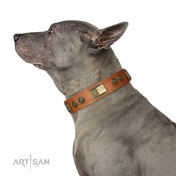 Incredible decorations on daily use dog collar