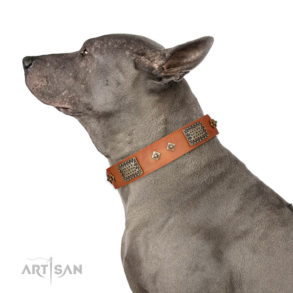 Everyday walking dog collar of leather with remarkable decorations