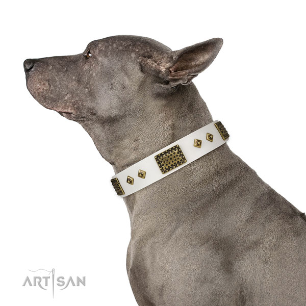 Handy use dog collar of leather with awesome studs