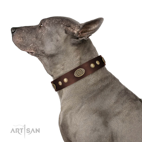 Corrosion proof fittings on full grain leather dog collar for everyday use
