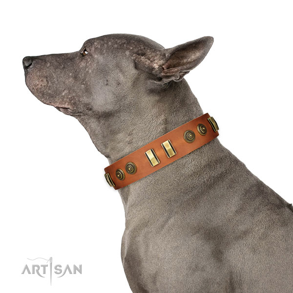 Durable hardware on full grain leather dog collar for walking