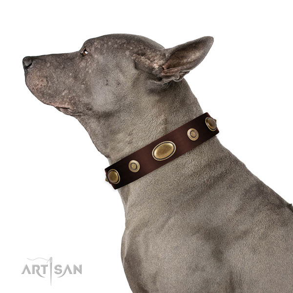 Comfy wearing dog collar of genuine leather with awesome studs