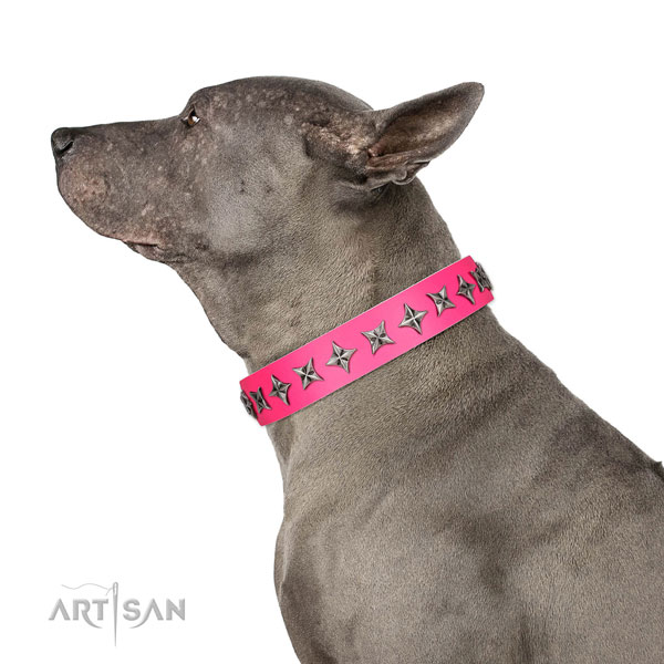 High quality full grain leather dog collar with unusual embellishments