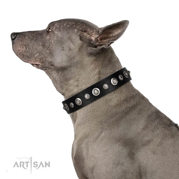 Durable full grain leather dog collar with incredible embellishments