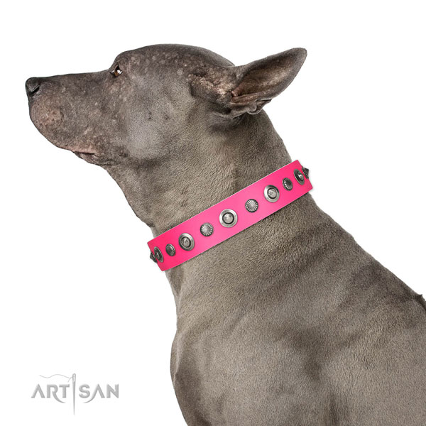 Genuine leather collar with strong fittings for your lovely pet