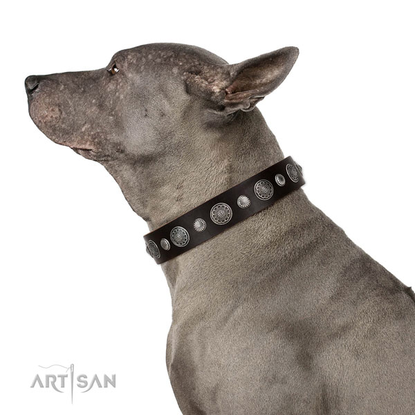 Unique natural leather dog collar with corrosion proof fittings