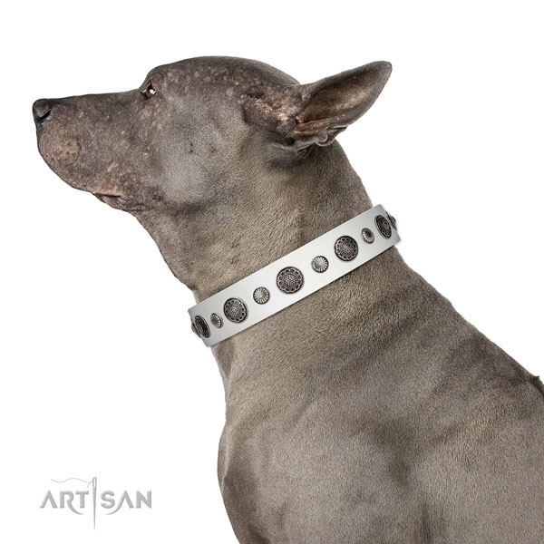 Unusual natural leather dog collar with rust resistant D-ring
