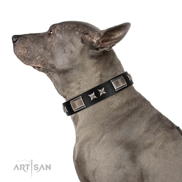 Comfortable wearing top notch leather dog collar with decorations