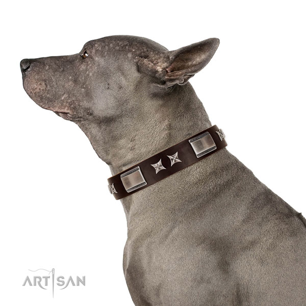 Designer collar of full grain natural leather for your attractive pet