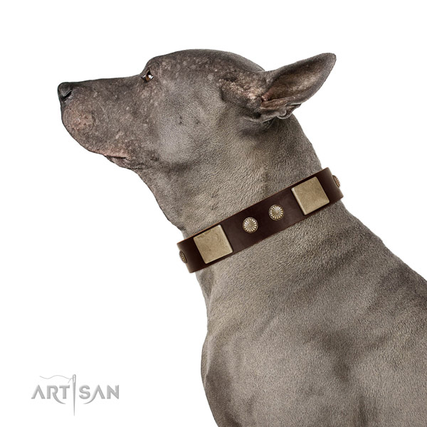 Corrosion proof buckle on leather dog collar for daily use