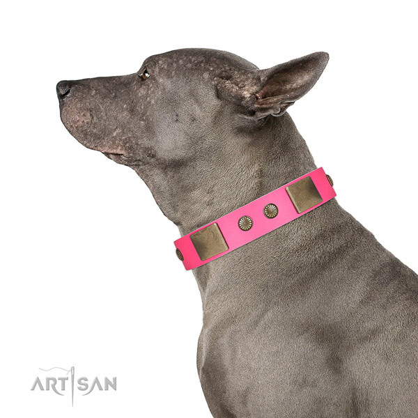 Durable D-ring on natural leather dog collar for everyday walking