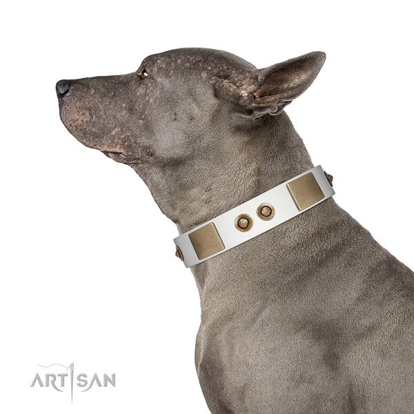 Fancy walking dog collar of genuine leather with inimitable embellishments