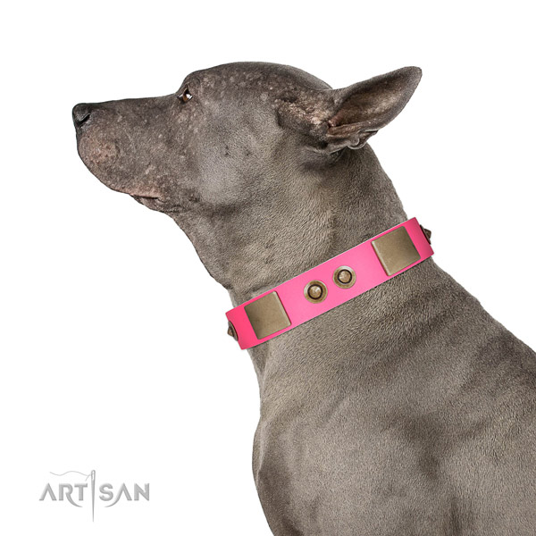 Comfortable wearing dog collar of leather with stunning decorations