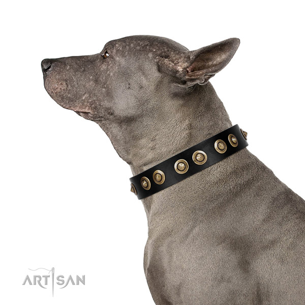 Daily walking dog collar of leather with extraordinary adornments
