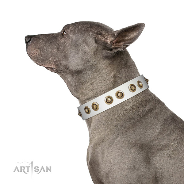 Comfortable wearing dog collar of leather with impressive embellishments