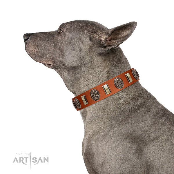 Full grain natural leather dog collar with remarkable embellishments