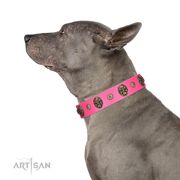 Strong buckle on full grain leather dog collar for walking