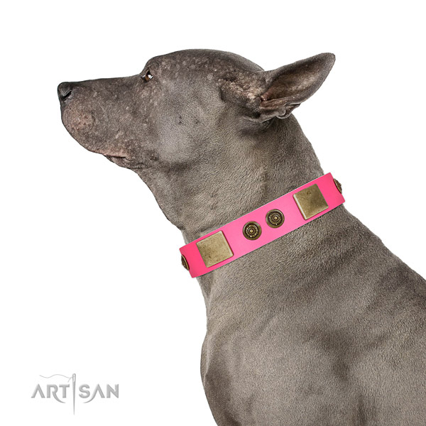 Studded dog collar made for your stylish four-legged friend