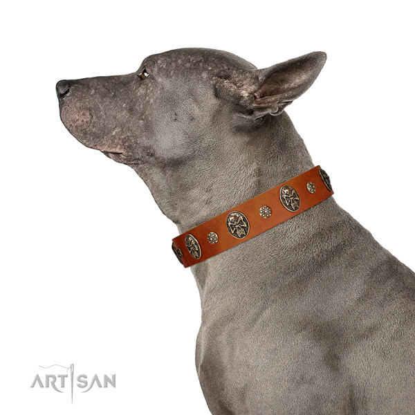 Everyday walking dog collar of natural leather with unusual decorations