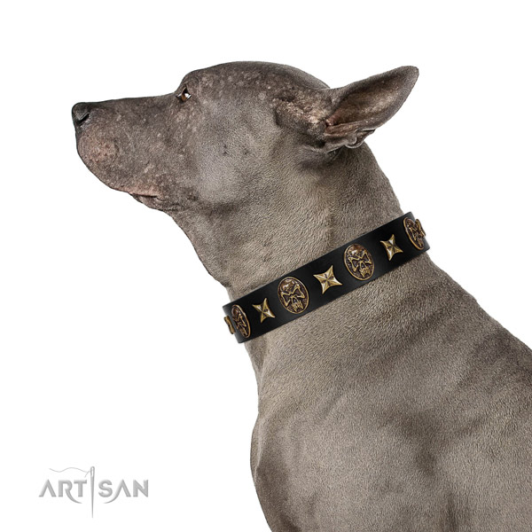 Handy use dog collar of natural leather with impressive adornments