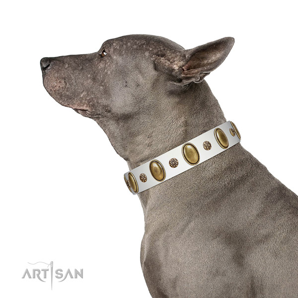 Daily use reliable leather dog collar with studs
