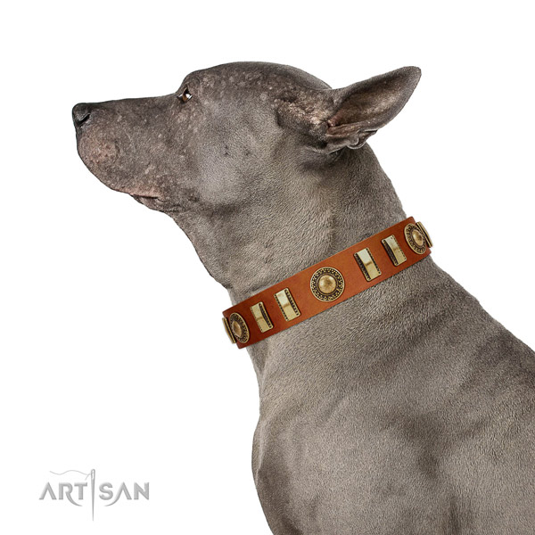 Trendy natural leather dog collar with reliable hardware