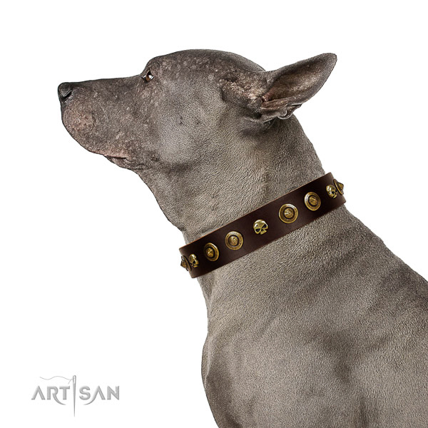 Strong natural leather dog collar with decorations for your canine