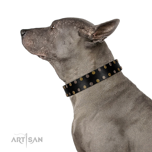 Awesome leather dog collar with corrosion proof studs