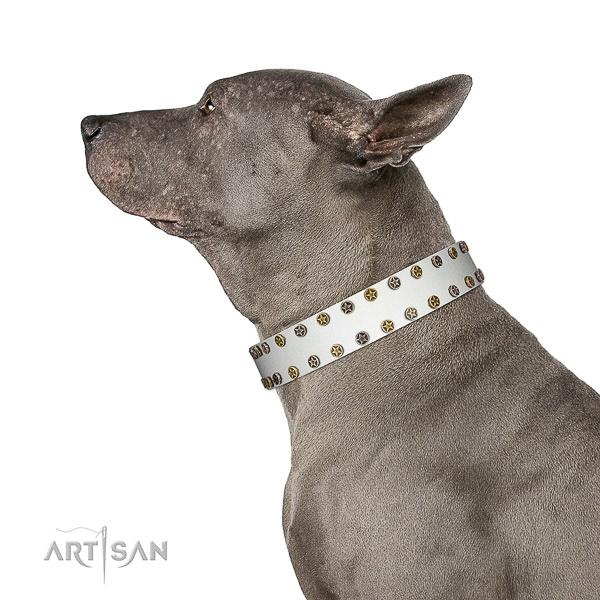 Unusual full grain genuine leather dog collar with corrosion resistant embellishments