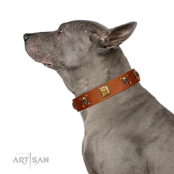 Stunning full grain leather dog collar with strong embellishments