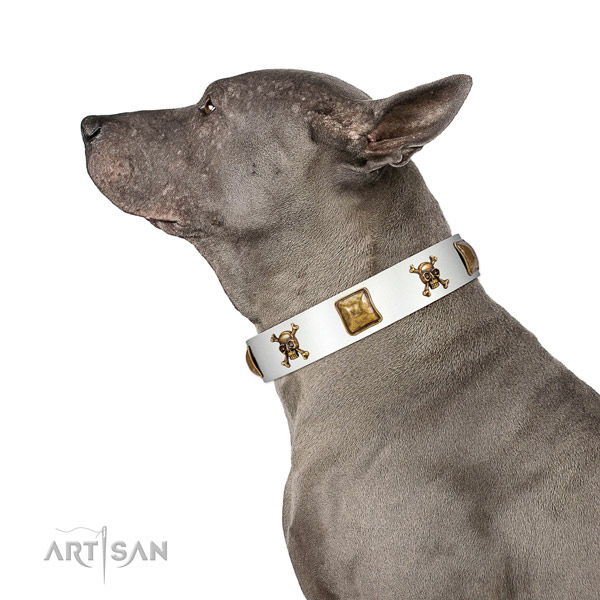 Comfy wearing genuine leather dog collar with decorations