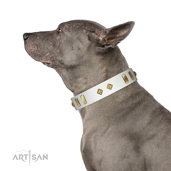 Comfy wearing best quality leather dog collar with studs