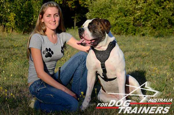 American Bulldog heavy duty Y-shaped  harness