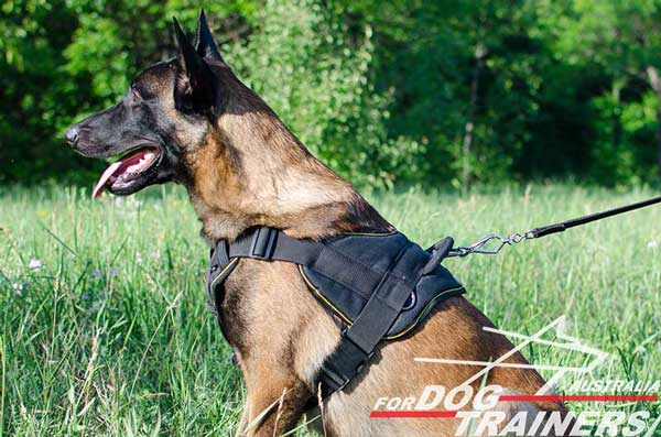 Belgian Malinois harness with soft chest plate