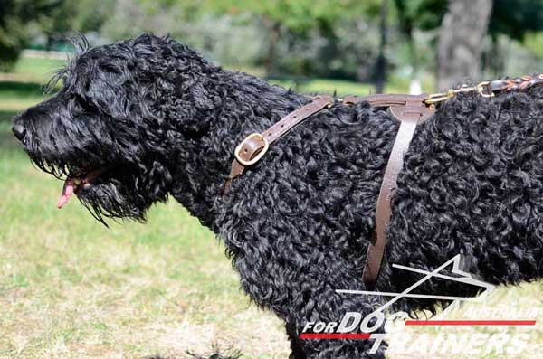 Harness for Black Russian Terrier comfortablr tracking and walking