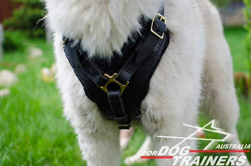 Large Dog Harness For Walking Australia