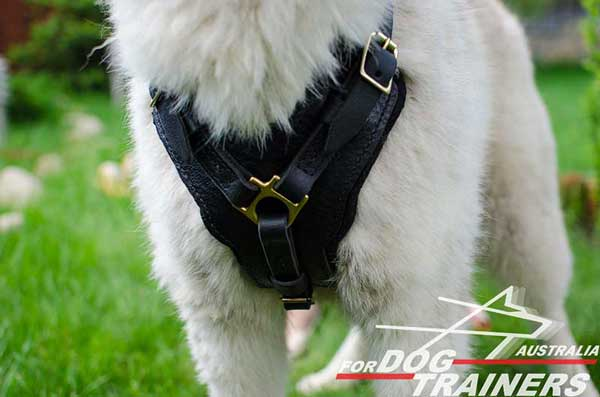 Padded Chest Plate on Leather Dog Harness for Walking