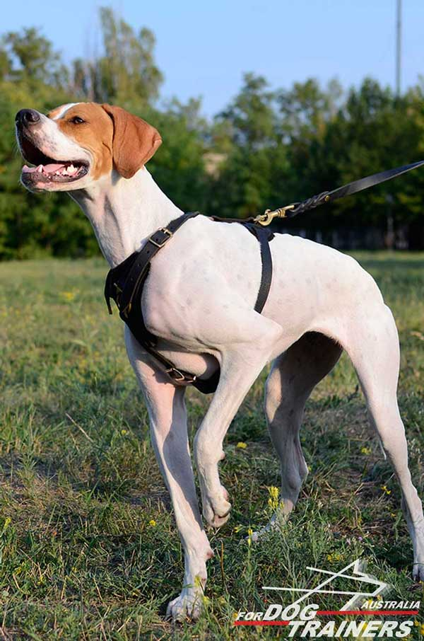 English Pointer Leather Tracking Harness Four Ways Adjuatable