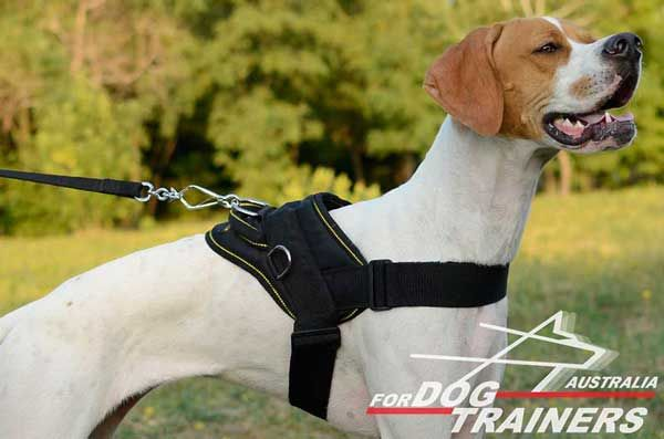Comfortable Nylon English Pointer Harness for Pulling