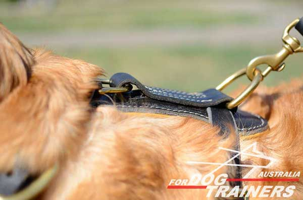 Brass Strong Ring on Golden Retriever Harness