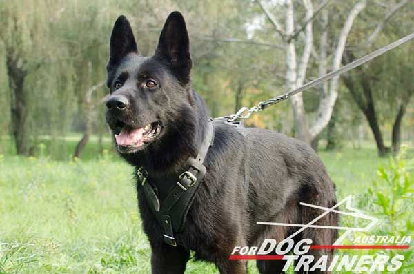 Classic Leather German Shepherd Harness